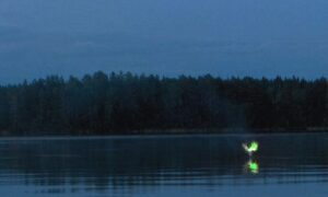 Bengal Swamps Aleya Ghost Lights